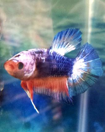 Fish aquariums pets west pet supplies in victoria bc for Live fish for sale